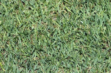 Abstract background of lush green grass. photo