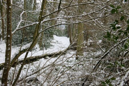 recedes: Scenic view of winding path in snowy winter forest.