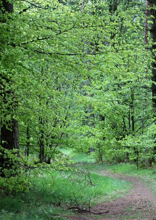 recedes: Scenic view of pathway receding through leafy green forest in countryside.