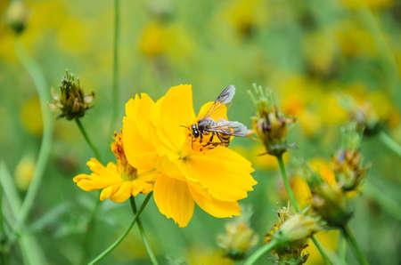 goldy: bee on flower