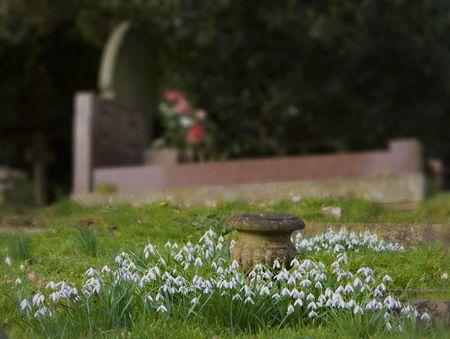 Schneeglöckchen Surronding ein Stein Urn vor der ein gut gepflegten Grab Standard-Bild - 4713107