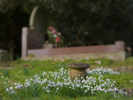 Snowdrops surronding a stone urn in front of a well tended grave