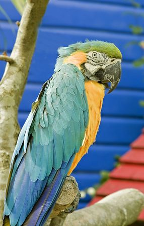 psittacidae: A blue and yellow parrot perched on a branch