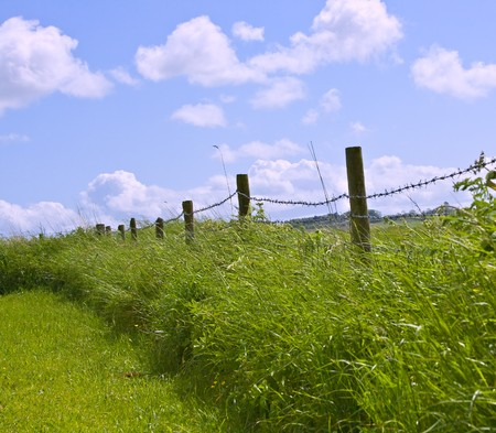Traditional English hedgerow running along the edge of a field
