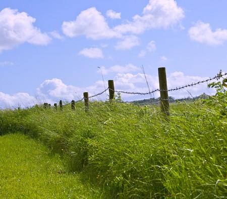 Traditionelle englische Knicklandschaft, die entlang der Kante eines Felds  Standard-Bild - 7306654
