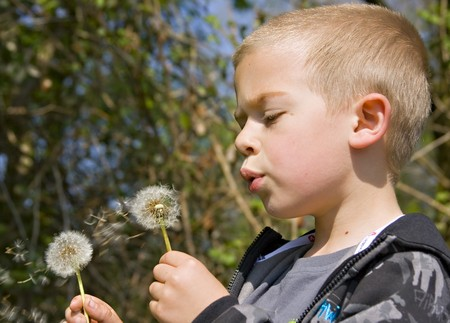 displace: Young six year old boy blowing the seeds from a dandelion clock in the spring sunshine Stock Photo