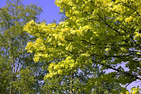 Background image of green leaves and blue skies