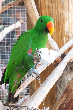 parot: a green parrot is eating rice in plastic