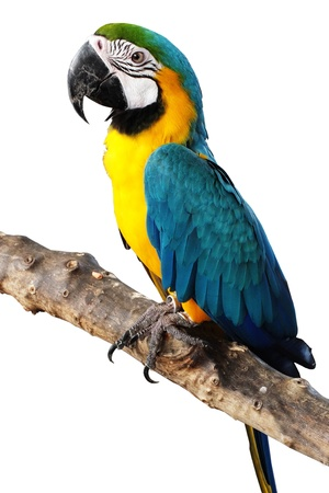 alone colorful parrot is standing on branch photo