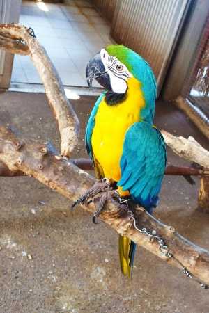 parot: alone colorful parrot is standing on branch