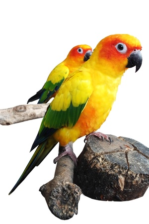 parot: two parrot are standing on branch