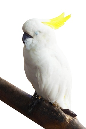 parot: white parrot is sleeping on branch