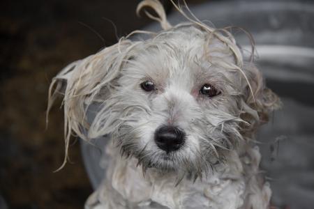 bathe: small dogs are bathe