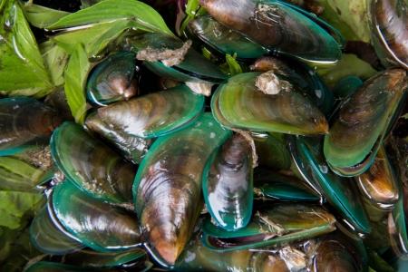 スパイス緑ムール貝