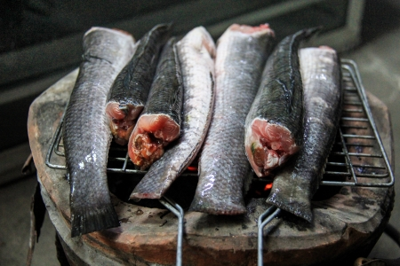 snakehead: Striped snakehead fish for grill .