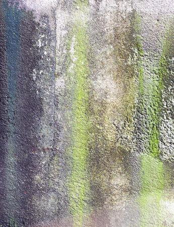 liquen: Liquen en el piso de cemento Foto de archivo