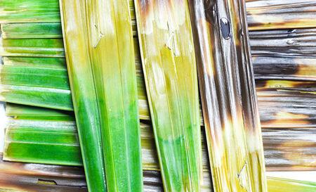 sweetmeat: Texture of Thai sweetmeat made of flour
