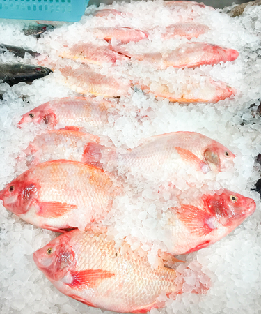 Fresh fish in the ice