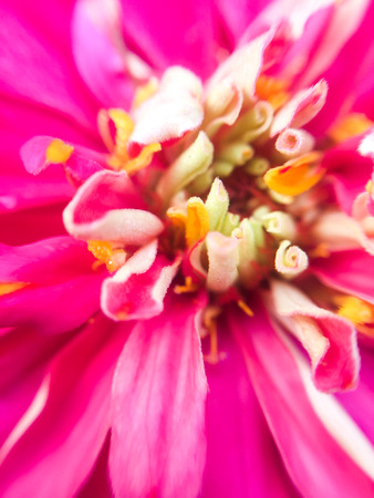 yellow blossom: Macro small DOF with yellow blossom