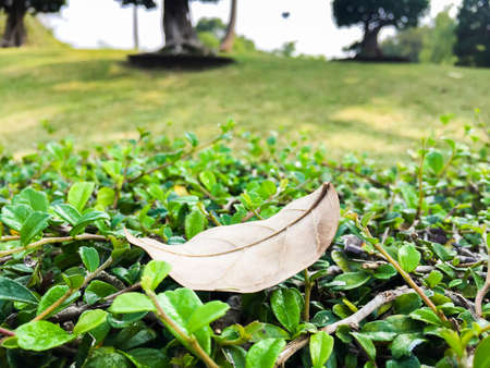 hojas antiguas: viejo deja en el fondo de la hierba