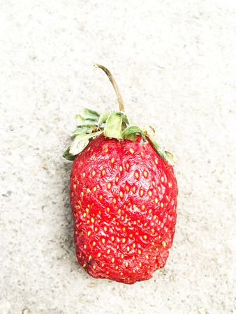 rot: Red rot Strawberry