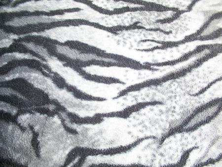 black tiger: White and black tiger striped Stock Photo