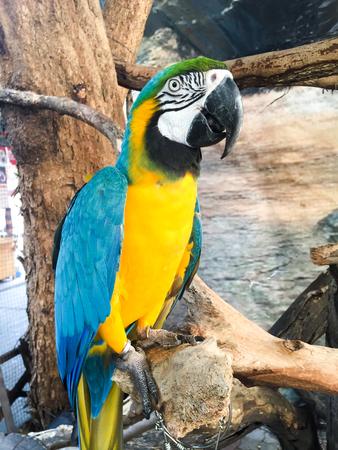 macaw: Macaw bird