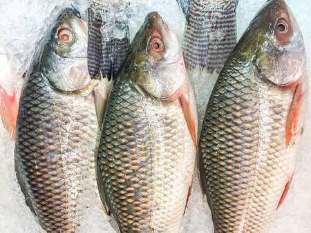 raw fish: Raw fish on the ice