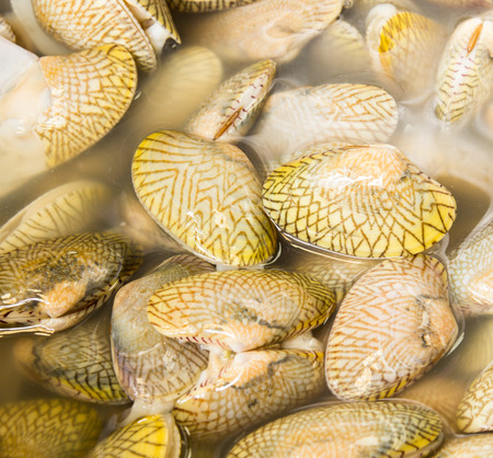 necked: Short necked clam background Stock Photo