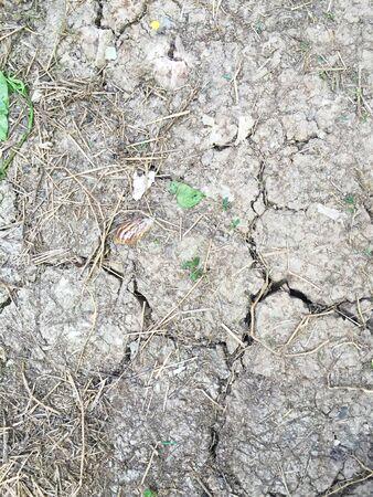 fissure: Crack texture du sol sec