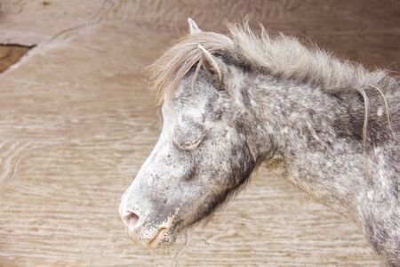 steed: Close up face horse is sleeping Stock Photo