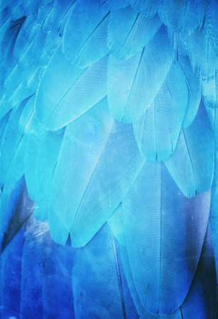 guacamaya: Guacamaya Pluma azul
