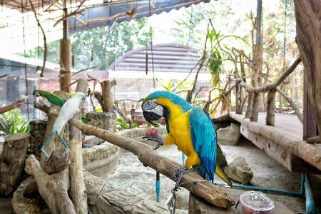 guacamaya: Macaw en la rama Foto de archivo