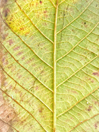 texture: leaves texture Stock Photo