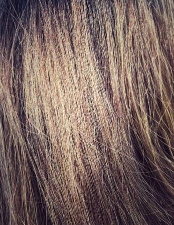 textura pelo: Gold women hair texture