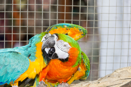 imprison: Macaw parrot is playing on the branch in the cage