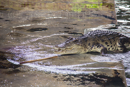 rafter: Danger crocodile on the river