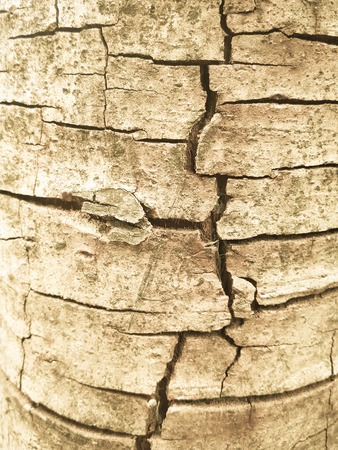 grunge tree: crack and grunge tree texture background