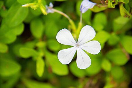 field stripped: white flower background