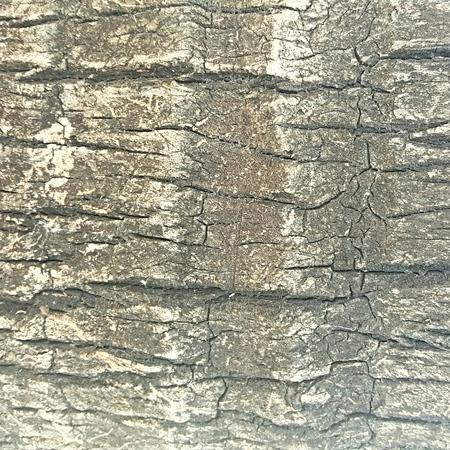 unsanitary: crack and grunge rough bark texture