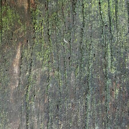 moist: lichen on the moist wood texture