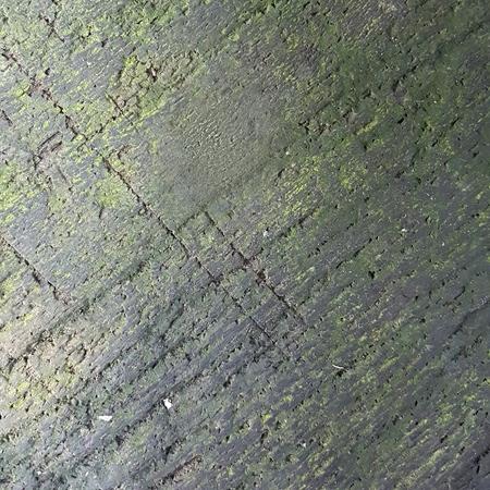 lichen: lichen on the moist wood texture