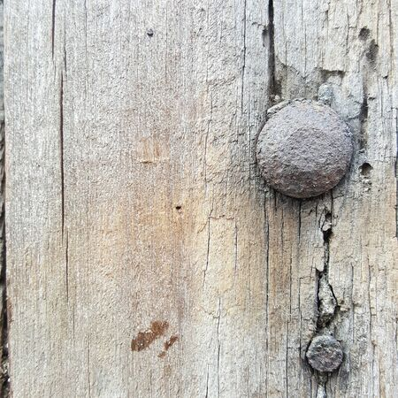 unsanitary: grunge and rusty screw in the old wood pole