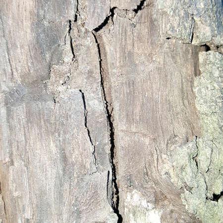 parting: crack wood texture