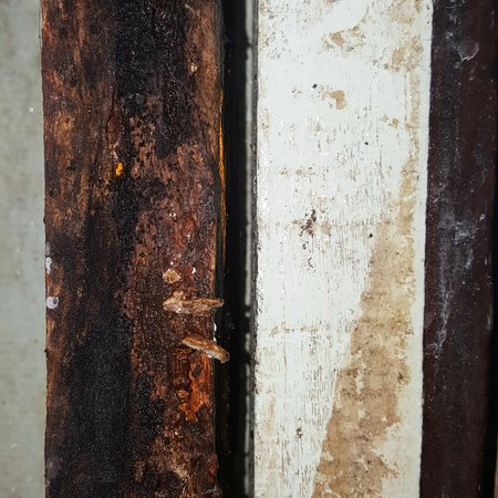 unsanitary: grunge and dirty wood texture