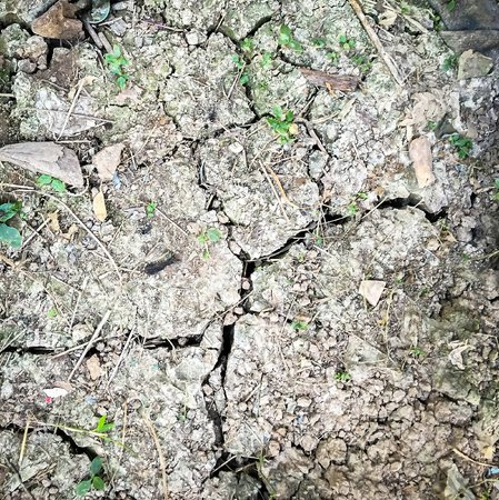 field stripped: Dry and crack soil texture Stock Photo