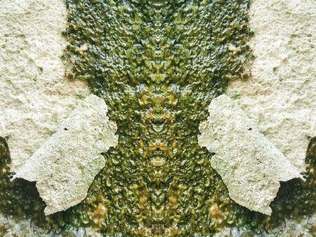 lichen: lichen on the wet stone texture Stock Photo