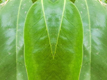 green background: green leaves texture background