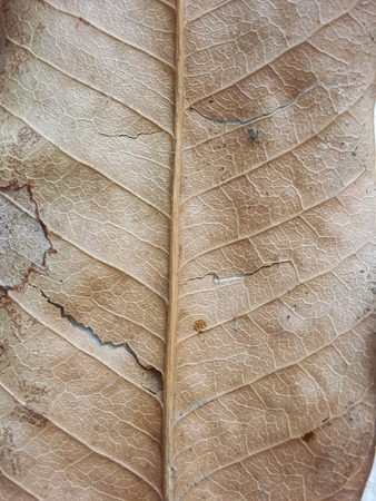 hojas secas: hojas secas textura Foto de archivo