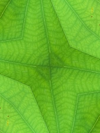 green background: green leaves background Stock Photo